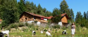 bayerischer-wald-berghütten-mieten-bayern-hüttenurlaub