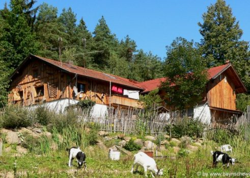 Berghütte & Almhütte