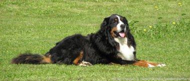 Bayern Urlaub mit Hund im Bayerischen Wald