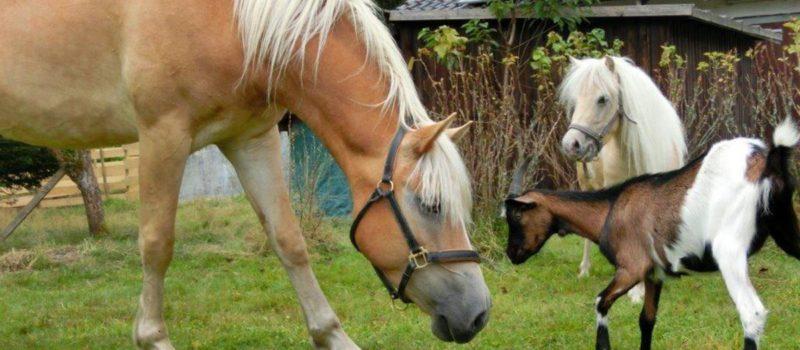 fohlenhof-familienurlaub-bayern-reiterpension-pferde-pony-1200