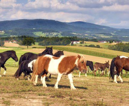 Ponyferienhof Eder in Mimming – Kontakt