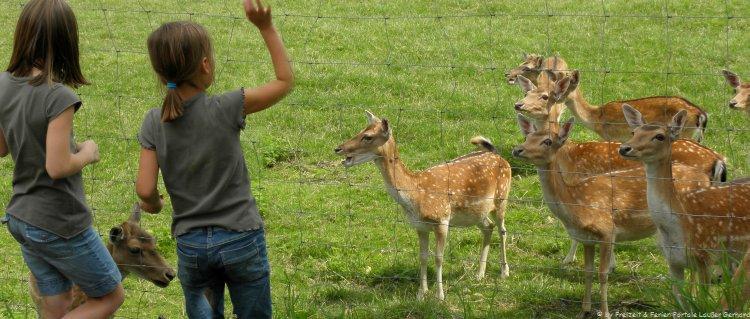 Tierparks in Bayern Tiergehege mit Rehen im Bayerischen Wald