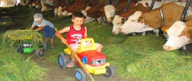 Bauernhofurlaub im Bayerischen Wald Kinder beim Kühe füttern