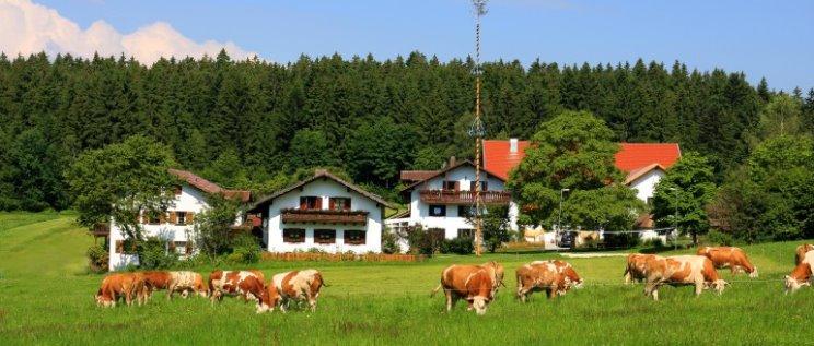 Bauernhof Wieshof Familie Neumeier Kirchberg Hofansicht