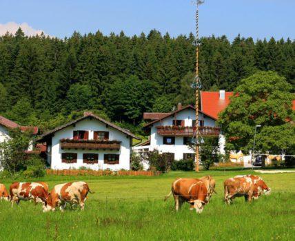 Wieshof – Wellnessbauernhof mit Kinder Erlebnisprogramm