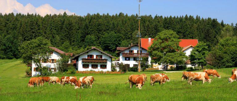 wieshof-wellness-bauernhof-bayerischer-wald-erlebnisprogramm-hofansicht-1600