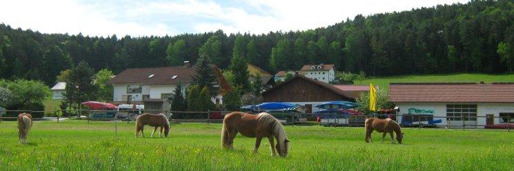 Bayerischer Wald Pferdehof in Bayern