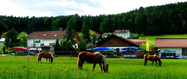 zankl-miltach-reiterhof-bayerischer-wald-ferienhof